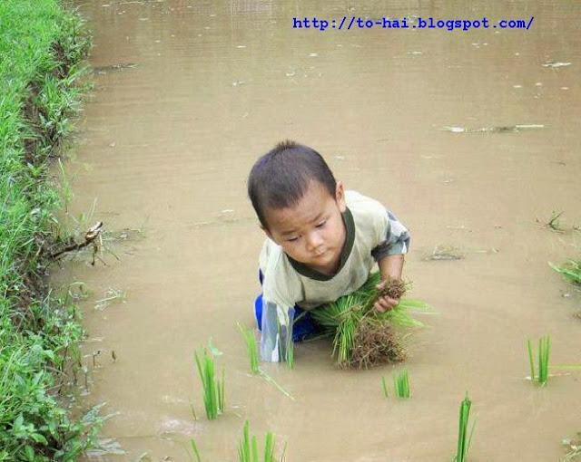 http://3.bp.blogspot.com/-MRjz2kNHb6k/U4mlK2QawcI/AAAAAAAABC4/2lNf0h04QmY/s1600/1_nh+em+bé+c_y+lúa.jpg